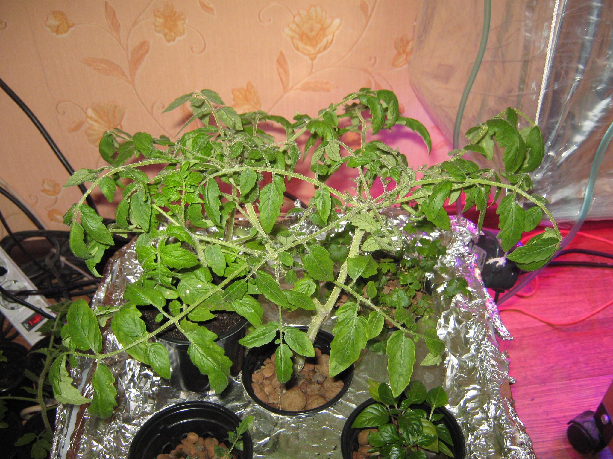 149Гидропоника питательный раствор для томатов