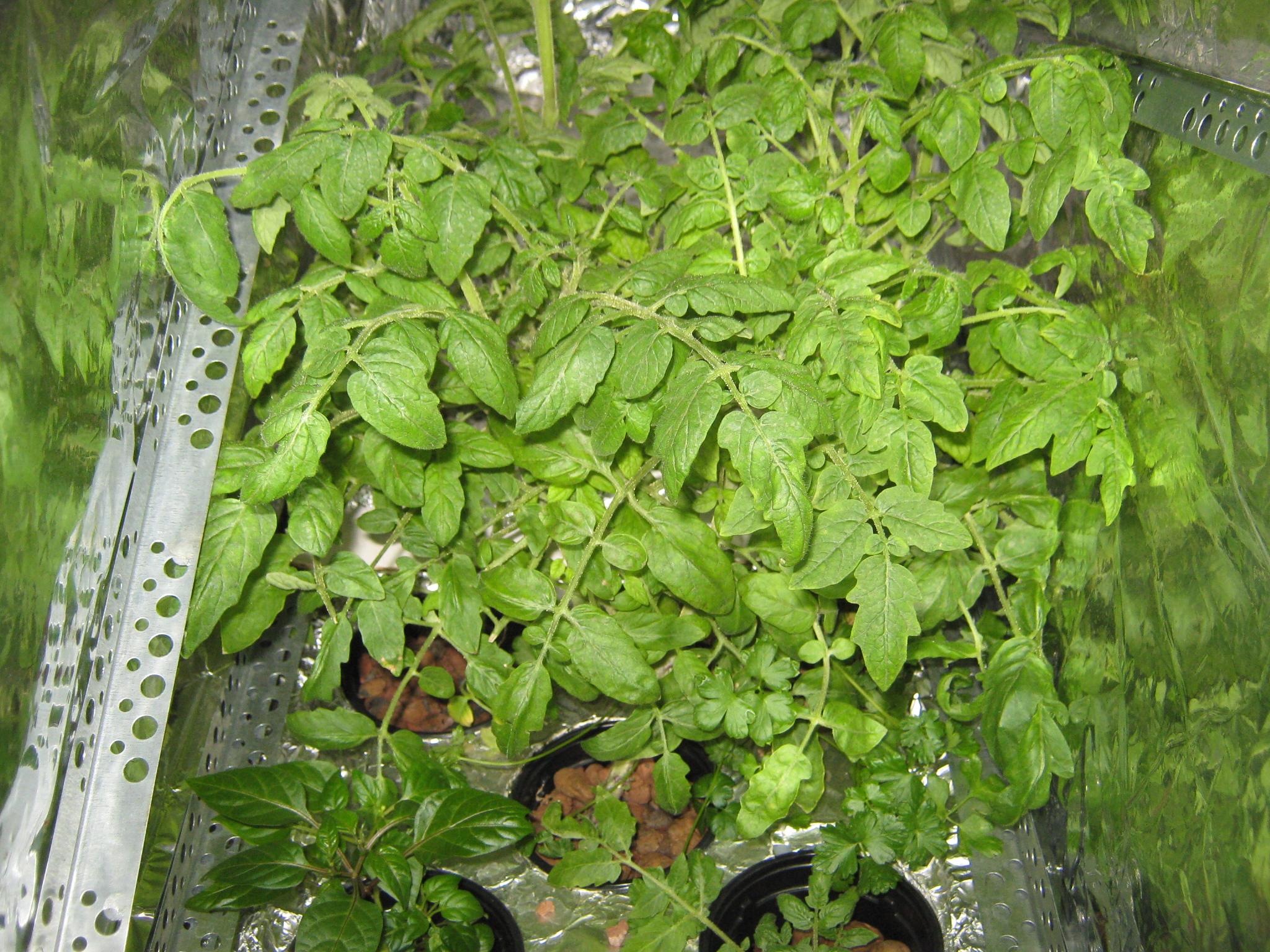 Раствор чеснокова и базыриной рецепт приготовления