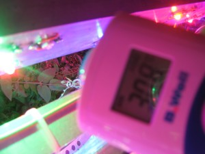 измерение температуры фитолампы для растений 1 измерение